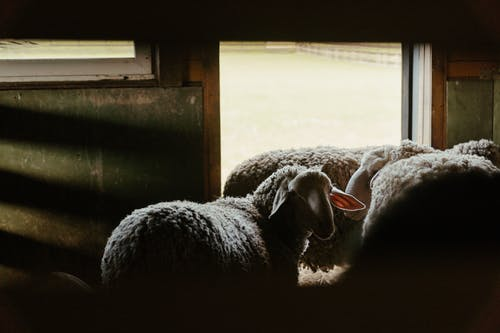 White and Gray Sheep on Black Textile