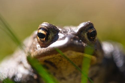 Head of a Frog Over a Body of Water
