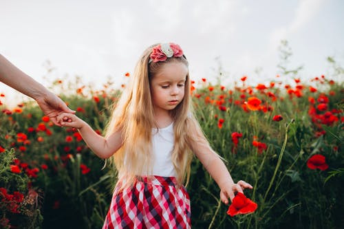 Little girl touching poppy and holding hand of parent