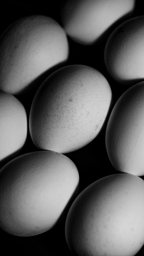 Set of eggs arranged in rows