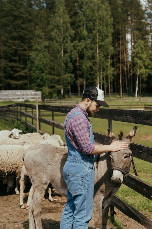 Foto profissional grátis de agricultor, animal de estimação, animal doméstico, ao ar livre