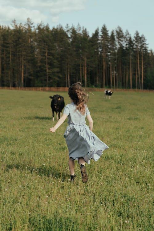 さびれた, さびれている, ドレスの無料の写真素材