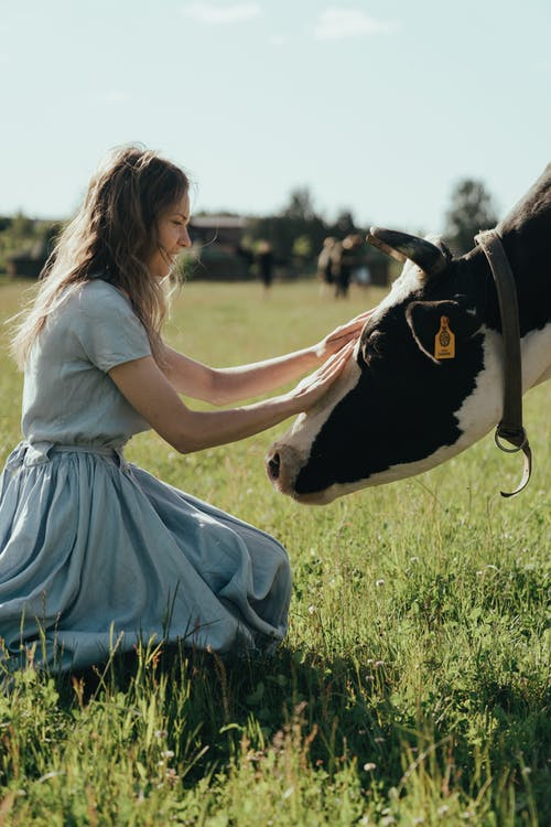 Girl in White Dress Sitting on Grass Field Beside Black and White Cow