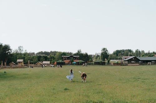 Immagine gratuita di animale domestico, azienda agricola, bestiame