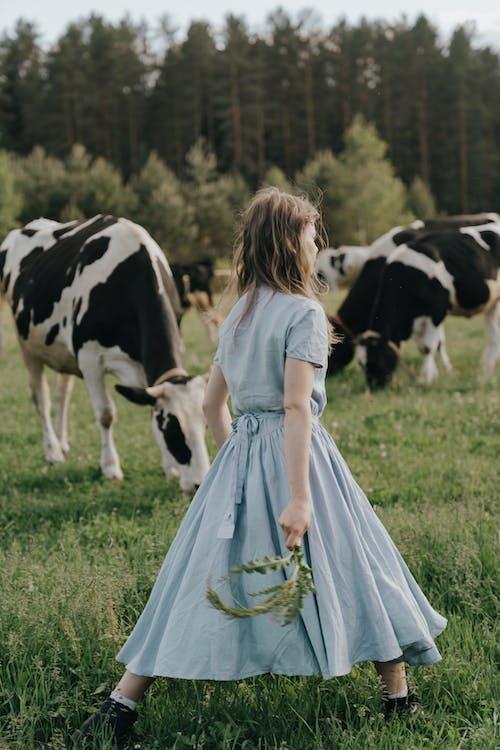 一群動物, 乳製品, 夏天 的 免費圖庫相片