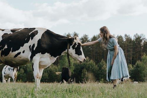 Immagine gratuita di abbigliamento, abito, animale domestico