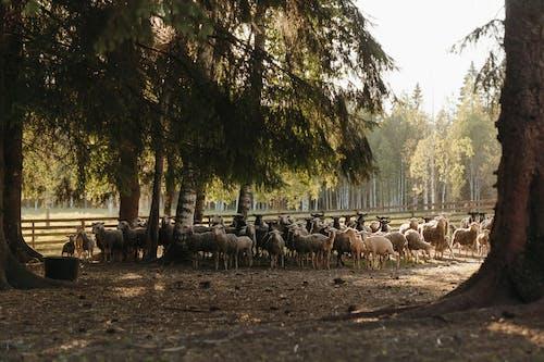 Herd of Sheep on Brown Soil