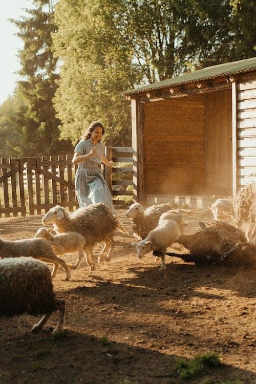 Woman in Blue Shirt Standing Beside Sheep