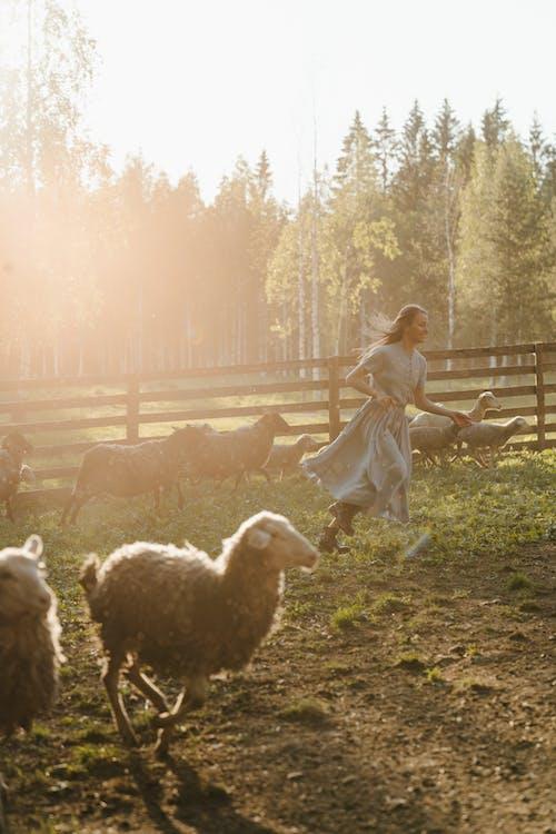 Girl in White Dress Standing Beside White Sheep