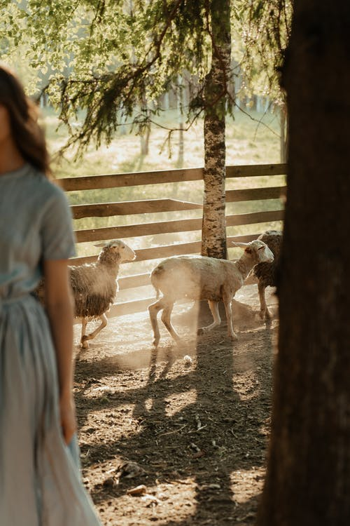 Woman in White Dress Standing Beside White Sheep