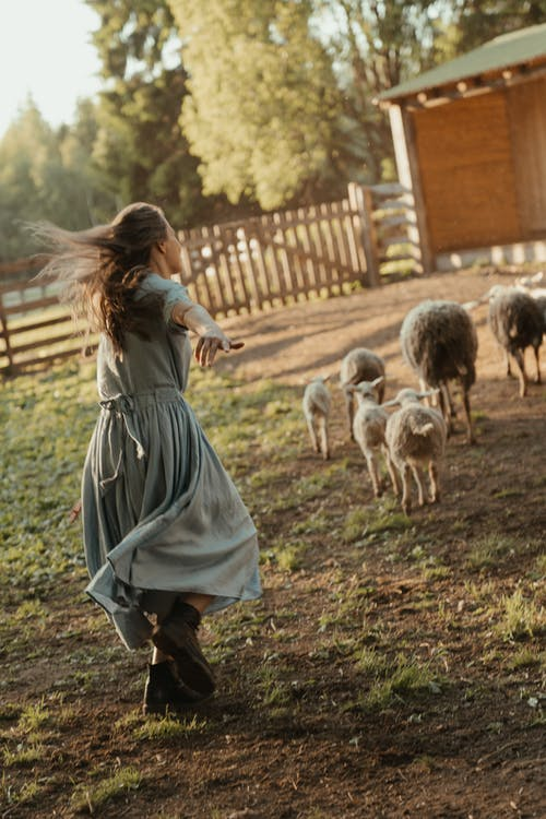 Woman in Gray Dress Holding White and Brown Goats