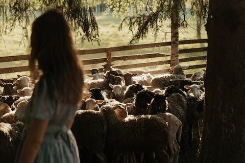 Woman in White Shirt Standing Beside Sheep