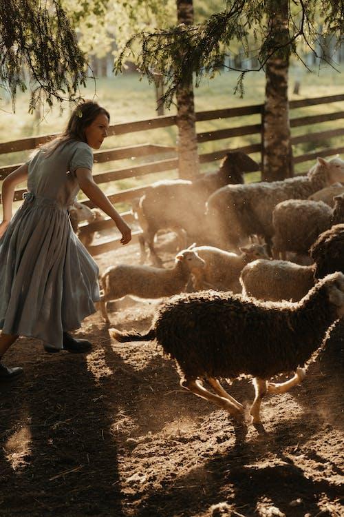 Woman in White Dress Standing Near Sheep