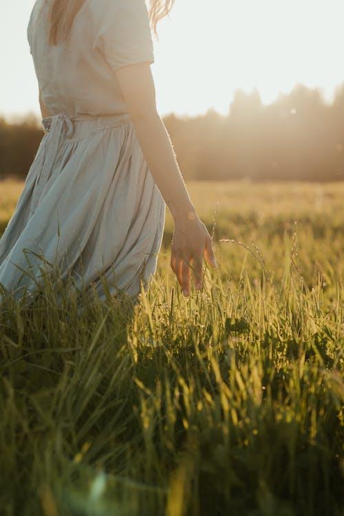 açık hava, akşam Güneşi, alan, çayır içeren Ücretsiz stok fotoğraf