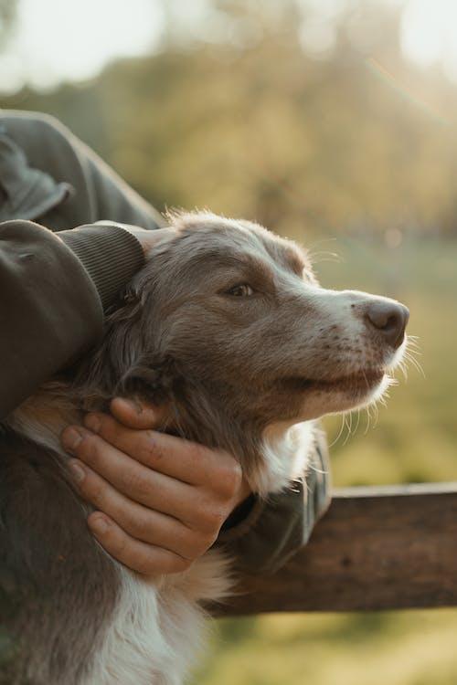 Бесплатное стоковое фото с вечернее солнце, держать, домашнее животное