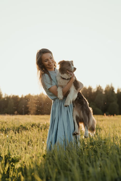 Безкоштовне стокове фото на тему «вечірнє сонце, вівчарка, вродлива, вродливий»