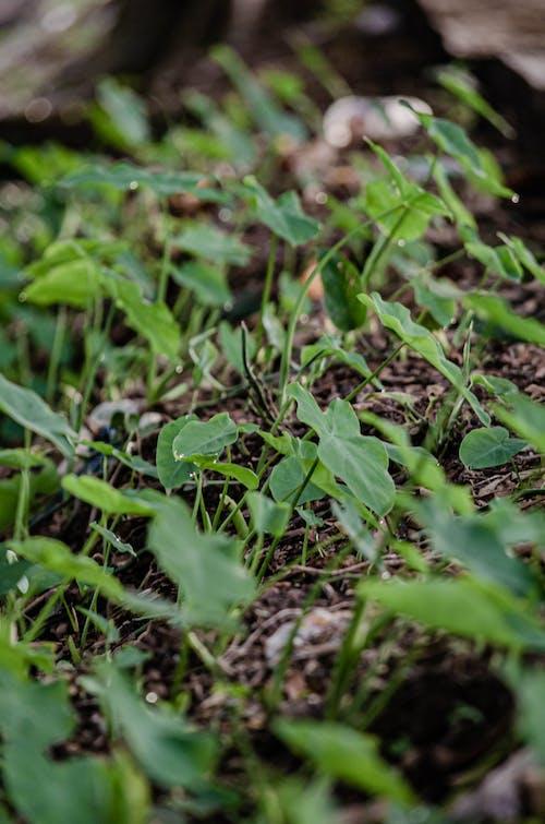 Free stock photo of 4k resolution, 4k wallpaper, green plants, leaves
