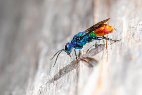 Δωρεάν στοκ φωτογραφιών με beetle, macro, άγρια φύση, άγριος