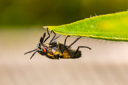 Black and Brown Fly on Green Leaf
