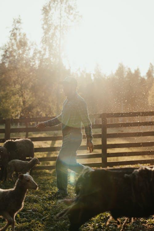Бесплатное стоковое фото с в общем и целом, вечернее солнце, двор фермы