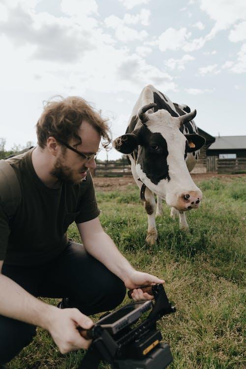 Immagine gratuita di agricoltura, animale domestico, azienda agricola