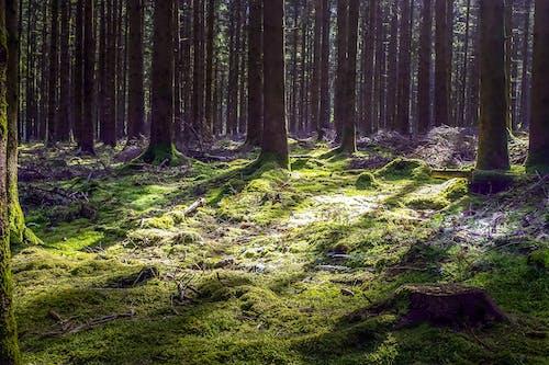 açık, açık hava, ağaç, ahşap içeren Ücretsiz stok fotoğraf