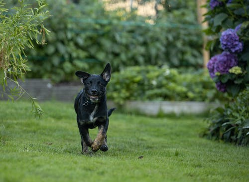 Free stock photo of dog, outside, puppy, running