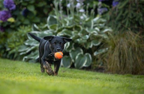 Black Short Coated Dog on Green Grass Field