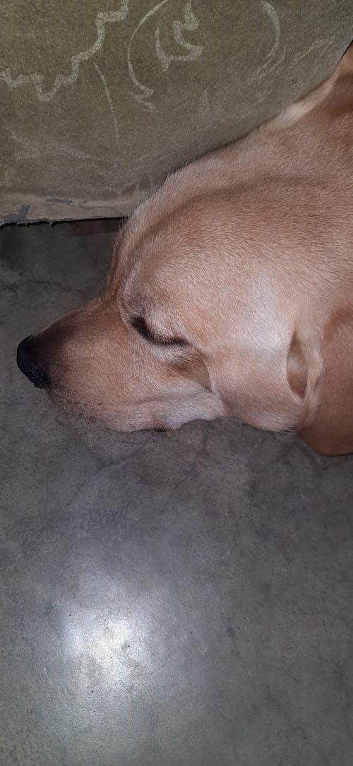Ilmainen kuvapankkikuva tunnisteilla baby-dog-world-labrador