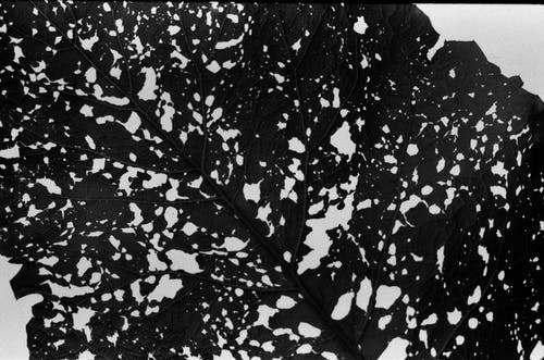 Background of black and white leaf surface