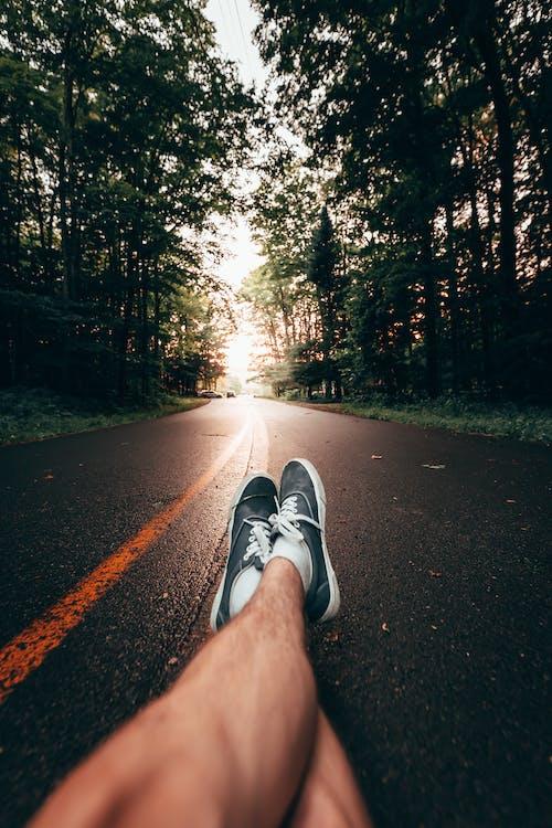 Imagine de stoc gratuită din arbore, asfalt, cădere, călătorie