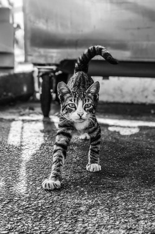 Безкоштовне стокове фото на тему «amoureux des animaux, amoureux des chats, animaux»