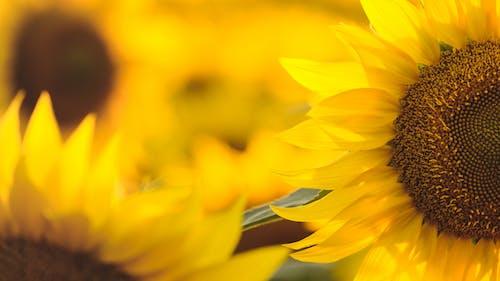 Free stock photo of beautiful nature, mothernature, nature