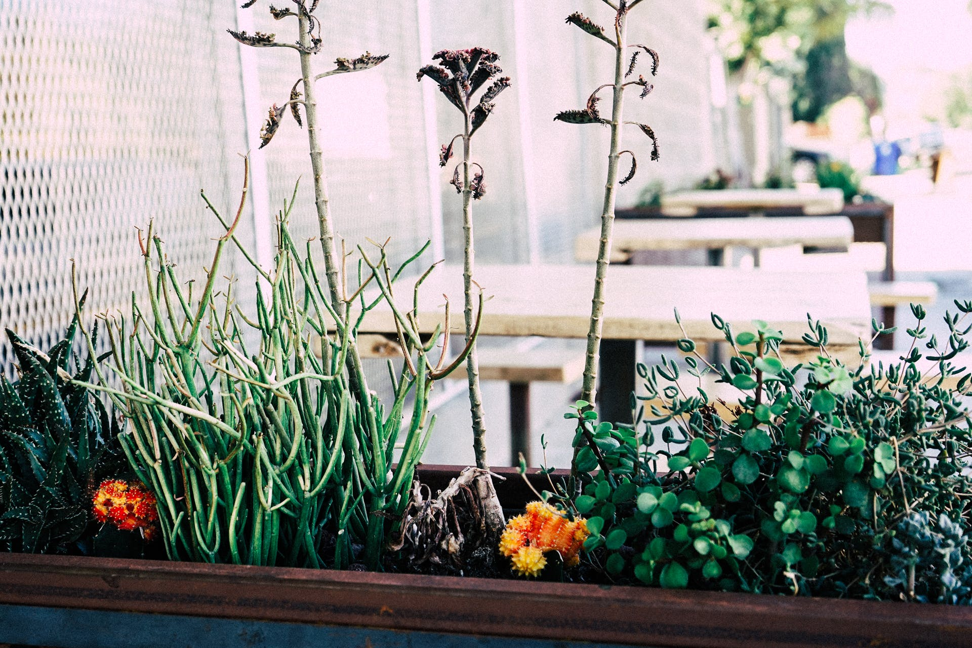 daylight, fence, flowerpot