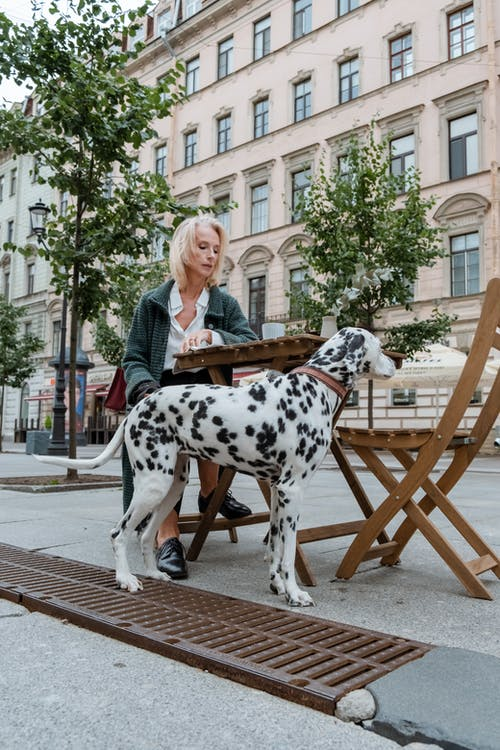 Woman in Black Leather Jacket Sitting on Dalmatian Dog Statue