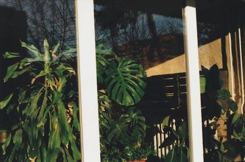 Ilmainen kuvapankkikuva tunnisteilla 35 mm, elokuva-valokuvaus, elokuvan kuva, ikkuna