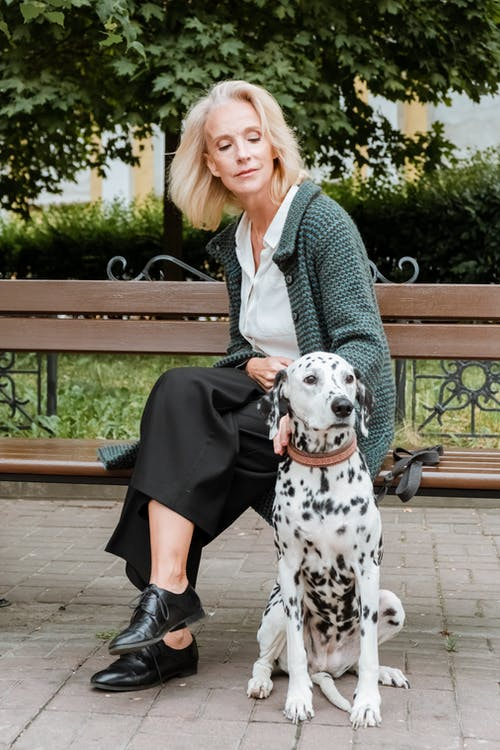 Woman in Black and White Dalmatian Dog Sitting on Brown Wooden Bench