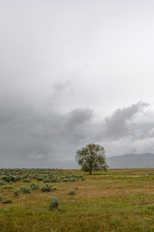 Lonely tree in field under cloudy sky