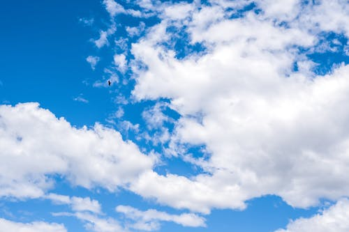 Low angle of colorful sky with clouds and small soaring bird in daylight