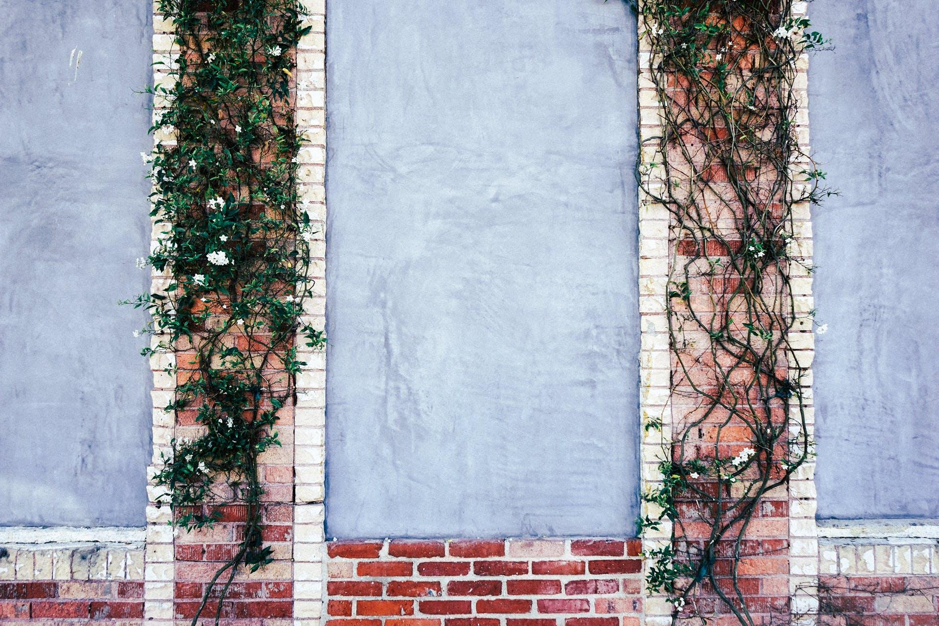 Kostenloses Stock Foto zu kletterpflanze, mauer, ziegel