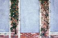 bricks, wall, climbing plant