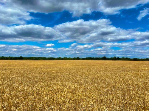 Brown Field Under Blue Sky and White Clouds
