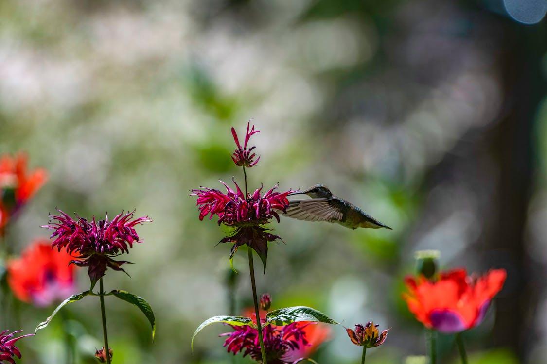 多彩的鳥, 紅褐色的蜂鳥, 美麗的花 的 免費圖庫相片