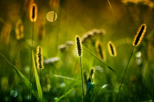 Fotos de stock gratuitas de al aire libre, armonía, botánica, calma