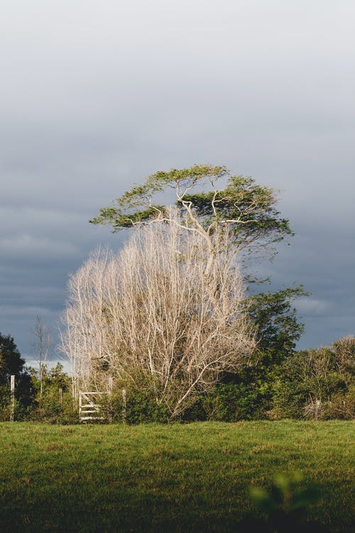 Scenery of green and leafless trees growing close on grassy verdant lawn in countryside under cloudy sky