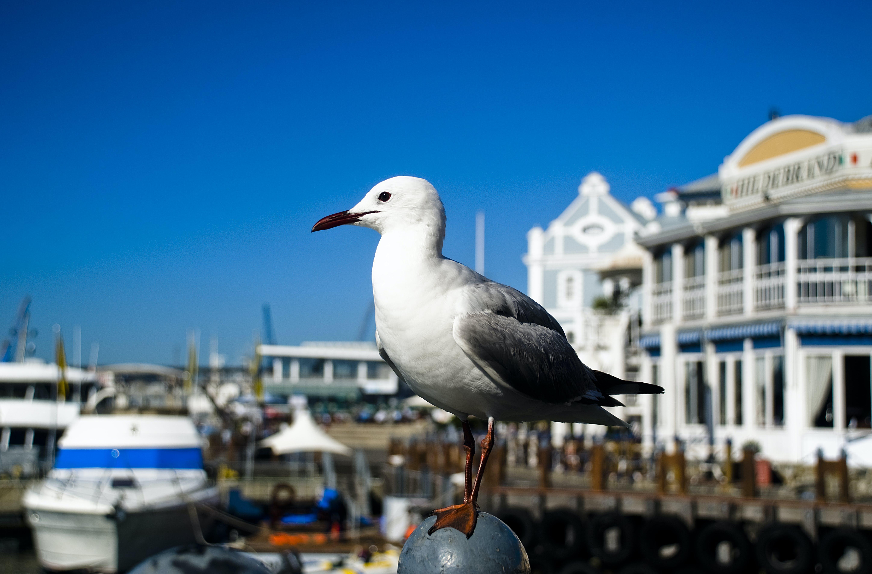 Free stock photo of bird, blue, Cape Town, dock