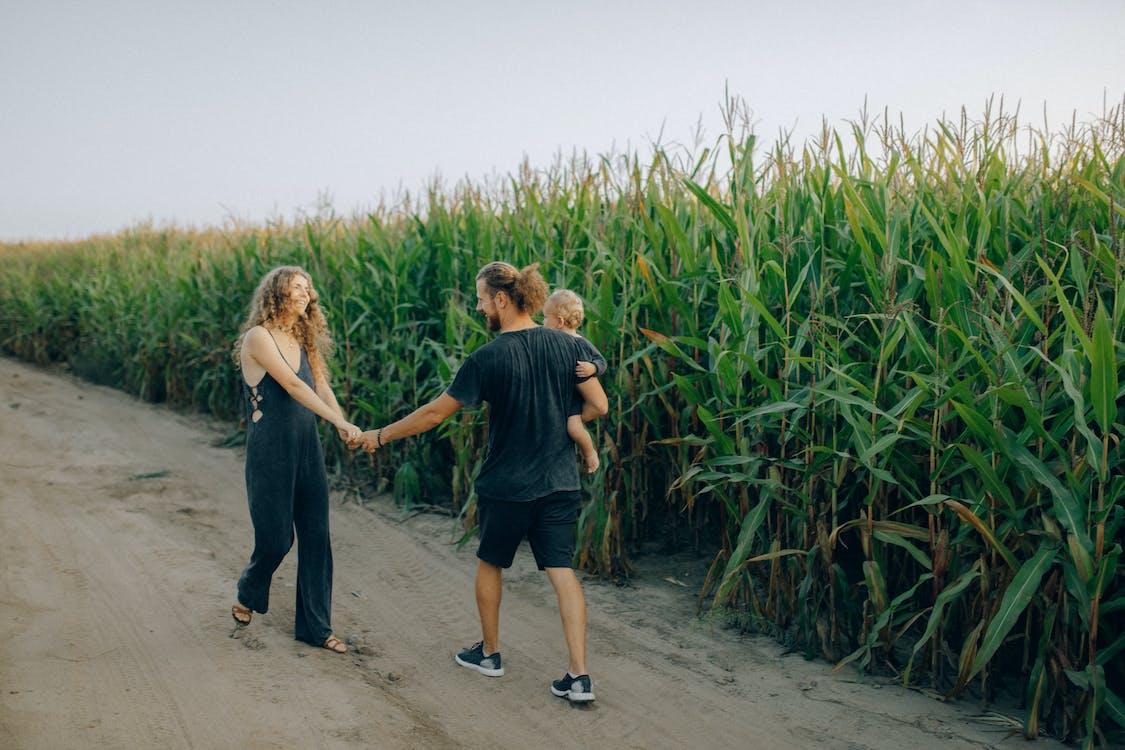 Безкоштовне стокове фото на тему «дитина, кукурудзяне поле, любов»