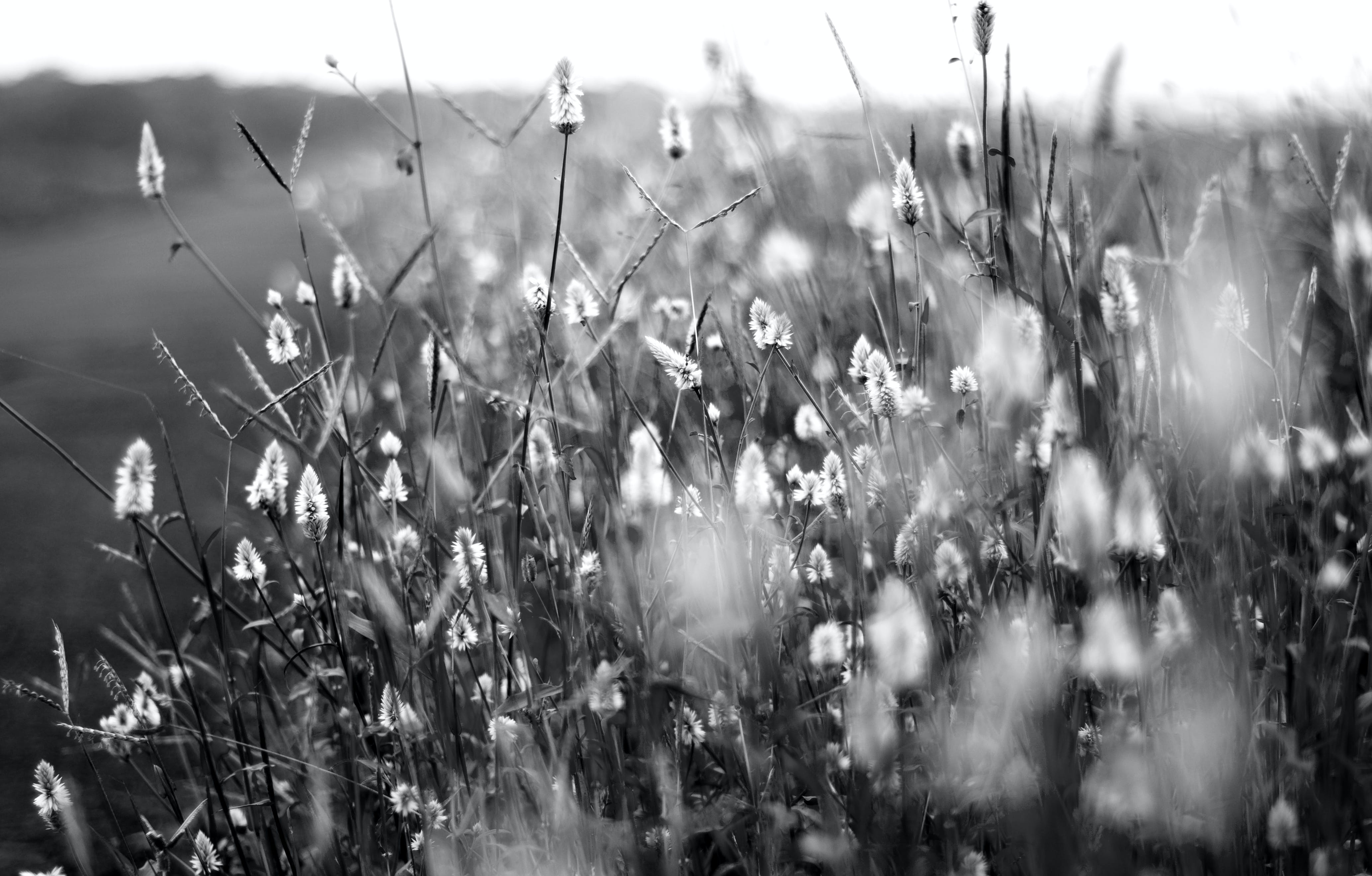 Grayscale Photography of Flower Field