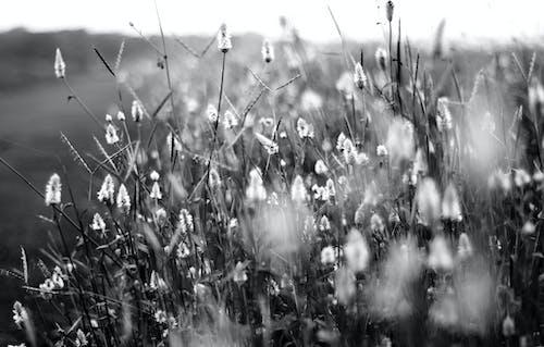 Darmowe zdjęcie z galerii z czarno-biały, droga, flora, gospodarstwo