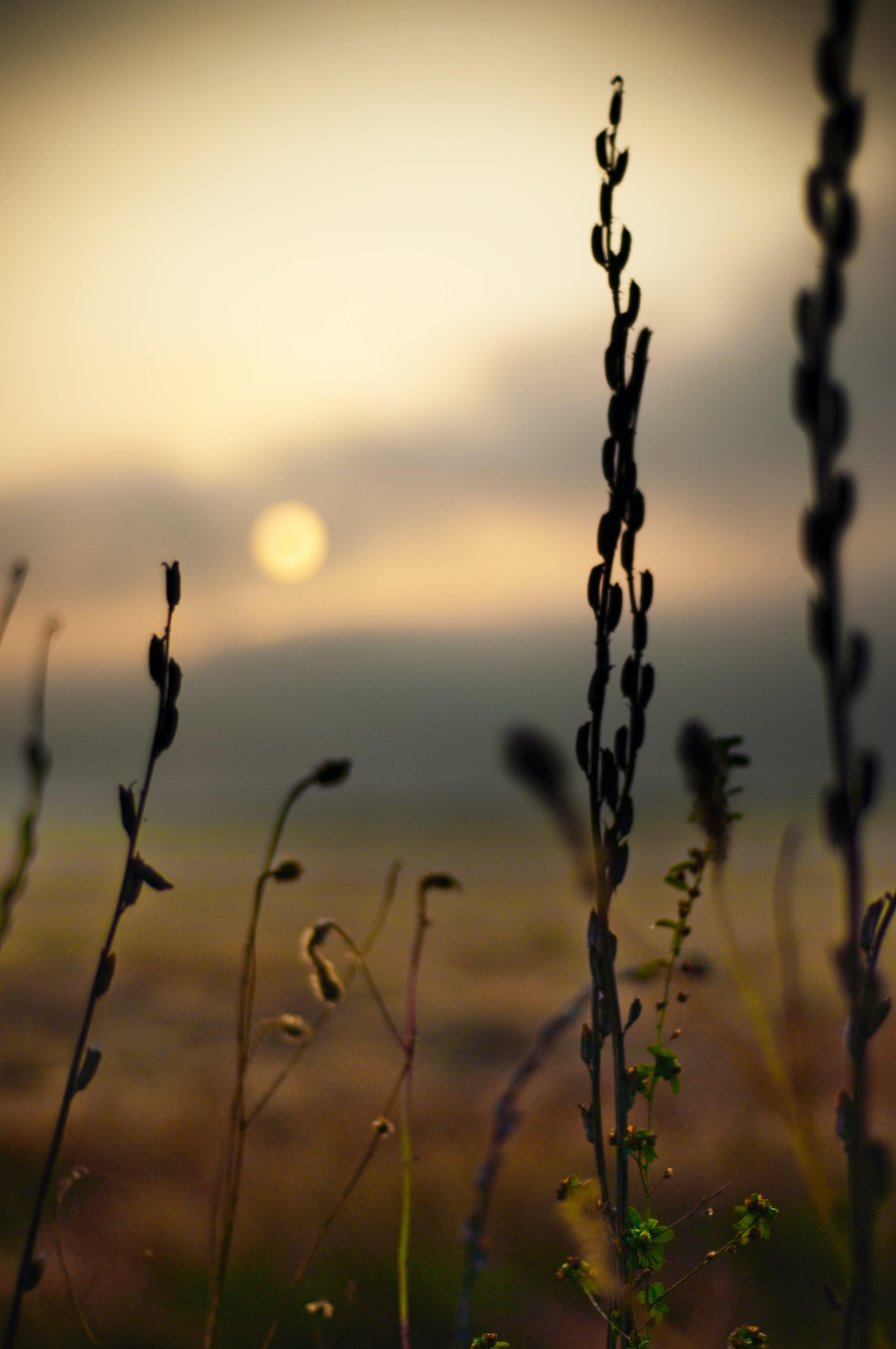 Free stock photo of nature, plant, plants, sunrise